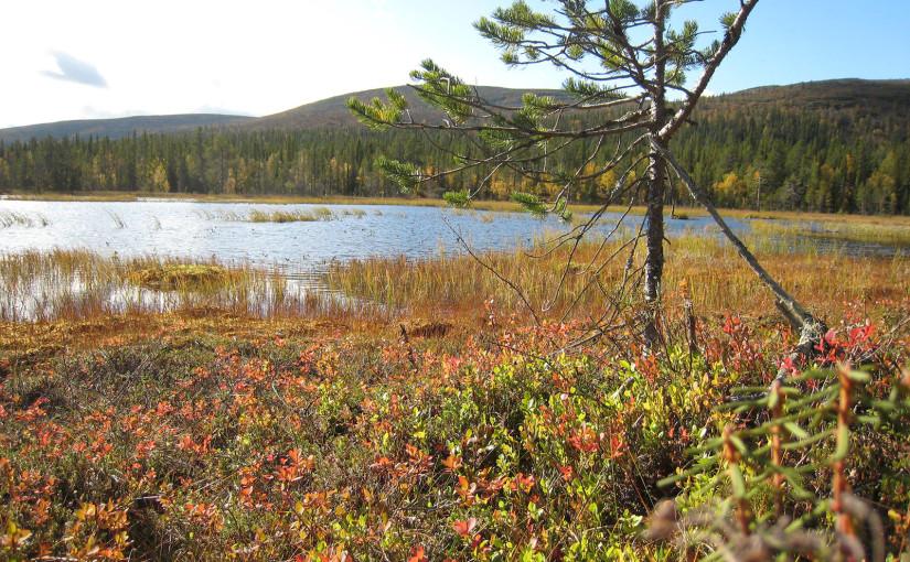 Snowtrail_Dogcamp Herbst