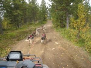 Snowtrail_Dogcamp Husky-Training
