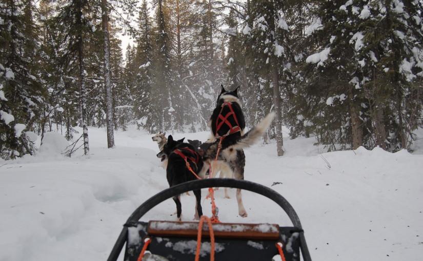 Snowtrail_Dogcamp Huskytour